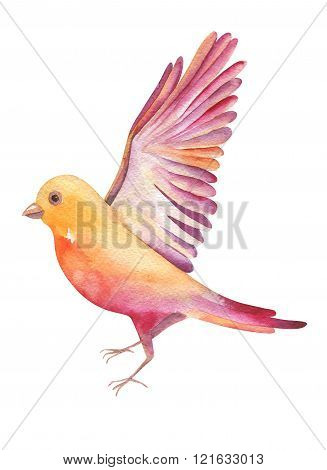 Watercolor Illustration Of A Yellow Bird Flying, Isolated On Whi