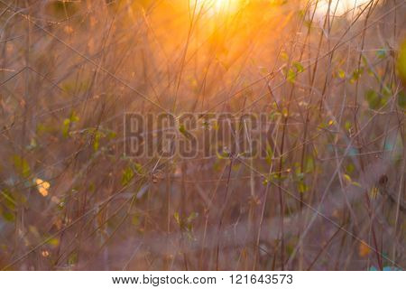 Winter iscoming sun light in grass field