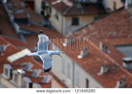 Flying Seagull Bird With Open Beak