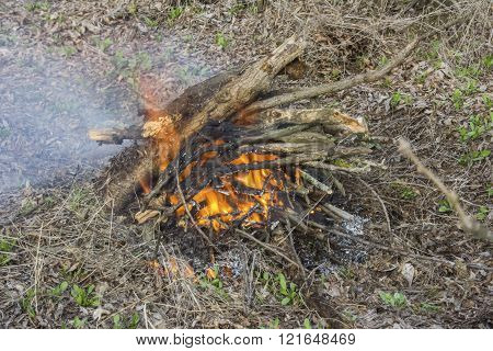 burning in the fire chopped wood and branches