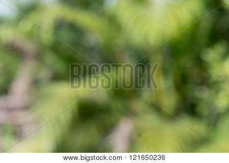 Blurred Defocussed abstract background of green garden with bokeh