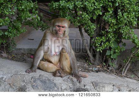 Monkey at Swayambunath temple in Kathmandu, Nepal.