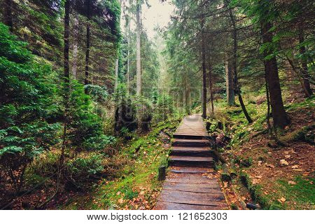 wooden hiking path in forest landscape