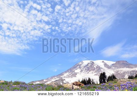 Landscape View Of Mt. Rainier During Spring Time