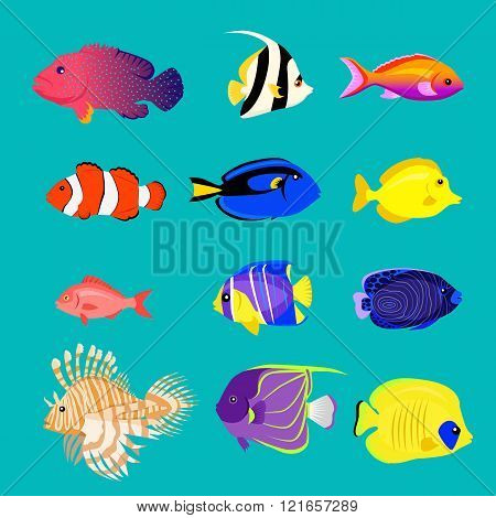 Set of Sea Fish Color Design Flat
