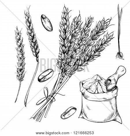 Wheat, rye and barley isolated on white background