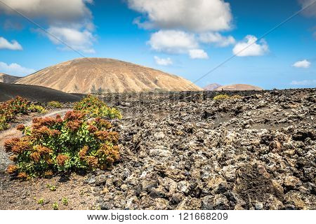 Timanfaya National Park In Lanzarote , Canary Island , Spain