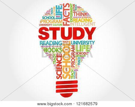 STUDY bulb word cloud business concept, presentation background