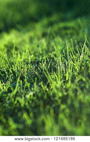 Grass Defocused Background