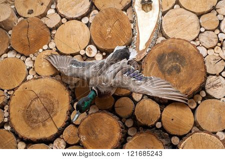 Taxidermy Bird