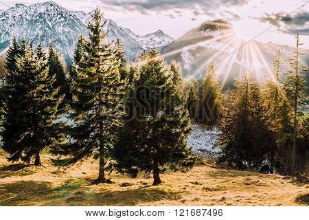 forest mountain sunset at allgaeu bavaria autumn