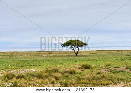 Etosha, Namibia, Africa