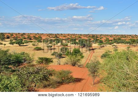 The Kalahari Desert, Namibia