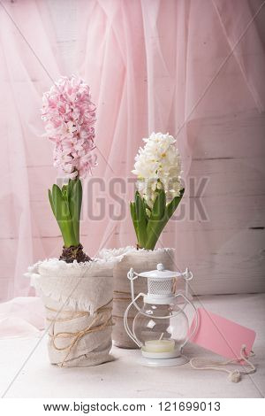 Still Life With Flowering Hyacinth