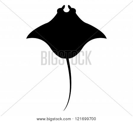 manta illustrated silhouette on a white background
