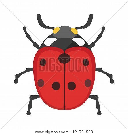 Cute cartoon ladybug vector insect isolated on white background.