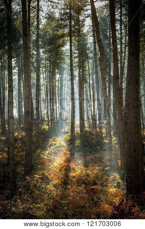 Woodland Patch