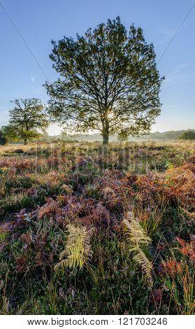 Dawn On The Heath