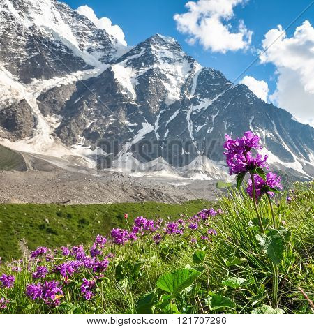 Red Meadow Flowers On A Background Of Snowy Mountains