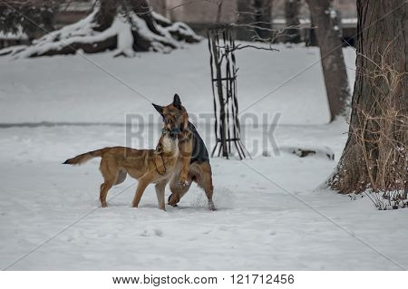 Love view of two domestic dog in park at winter