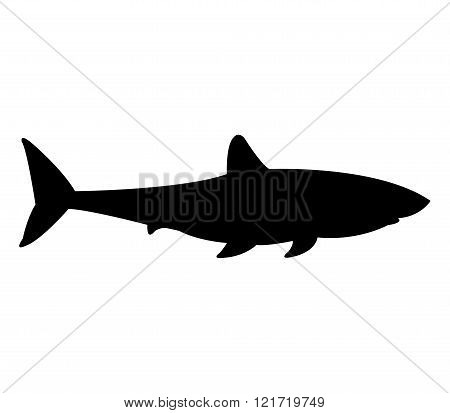 Shark silhouette illustrated on a white background