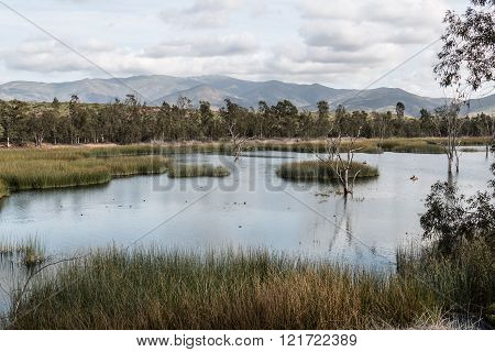 Ducks in Lake with Marsh Grass, Trees and Mountains