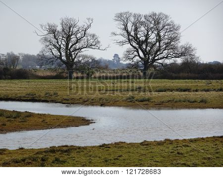 Rural River And Trees Landscape