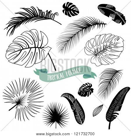 Set of trendy Black and White Tropical leaves, Vector illustration