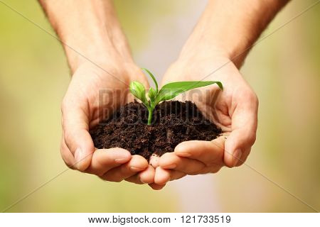 Male hands holding plant and soil on natural background