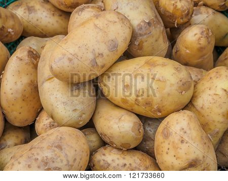 Fresh organic potatoes sold on morning market