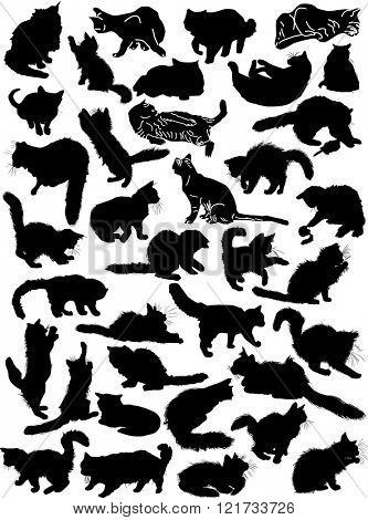 illustration with cat collection isolated on white background