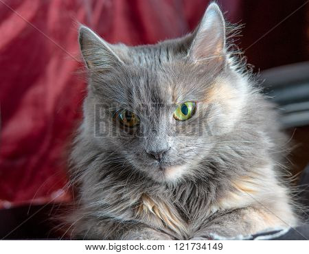 Cute cat face on red background