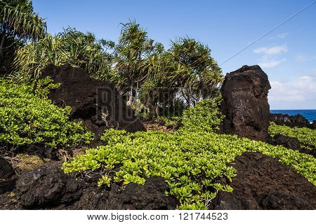 Great views of the Pacific Ocean and the East Maui coast line. Contrasting volcanic rocks and the ocean. One'uli Black Sand Beach