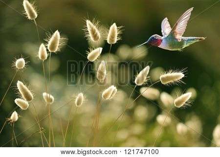 Hummingbird Over Green Grass Summer Background