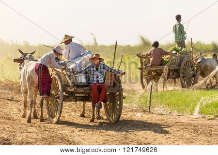 BAGAN, MYANMAR, JANUARY 21, 2015 : Burmese farmers driving an oxcart are coming to unloading a boat of food and materials along the Irrawaddy river near Bagan, Myanmar (Burma).