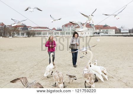 Two women feeding the swans and seagulls on the beach at spring time