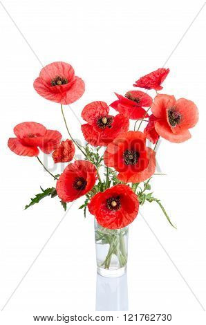 Red Poppies  In Glass Vase Isolated On White Background