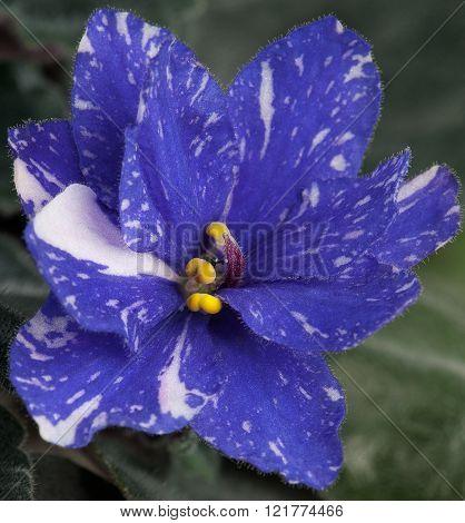 Beautiful Violet Flower