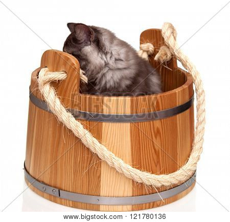Cute grey cat sitting in wooden barrel on white background