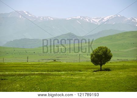 Idyllic landscape with single tree and mountains on background