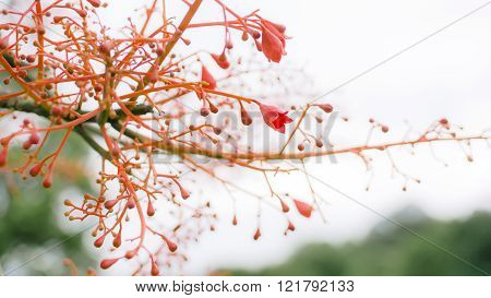 Tree Flowering Red Close Up