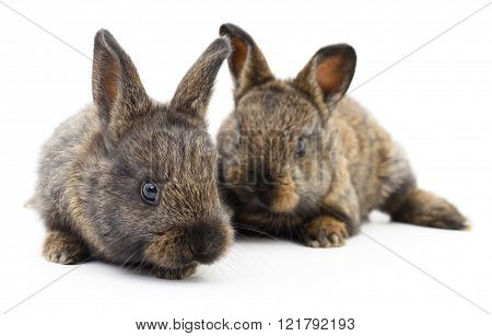 Two Bunny Rabbits.