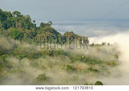 Sea Fog On The Mountain Hills