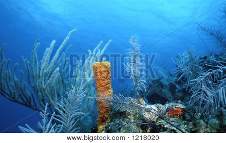 Sea Whips And Yellow Sponge
