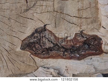 tree cut close up