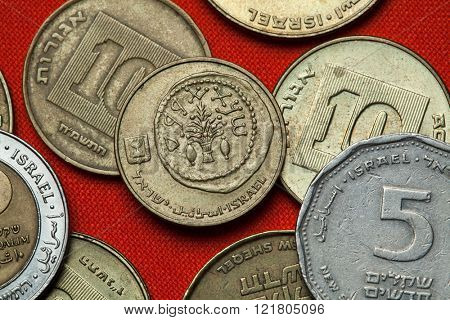 Coins of Israel. Replica of an ancient coin with a lulav between two etrogim depicted in the Israeli five agorot coin.