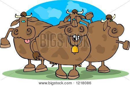 Cowering Cows