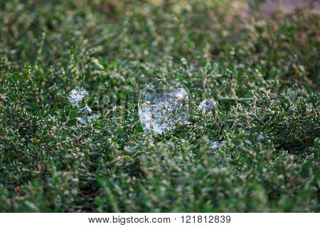 Bubble On The Green Grass. Abstract Background