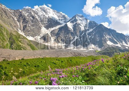 High Mountain With Glacier, Below The Flower Meadow