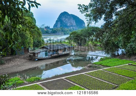 China. Vegetable Garden On The River Bank